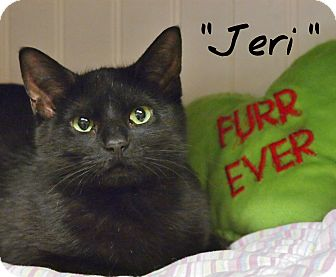 Domestic Shorthair Cat for adoption in Ocean City, New Jersey - Jeri