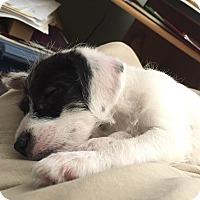 Adopt A Pet :: PANDA - Higley, AZ