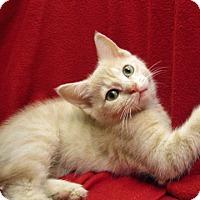 Adopt A Pet :: 16-c02-005 Gidget - Fayetteville, TN