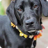 Adopt A Pet :: Jen - Baton Rouge, LA