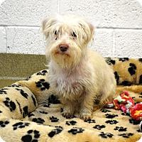 Adopt A Pet :: Tramp - Miami, FL