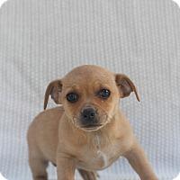 Adopt A Pet :: Crystal - Loomis, CA