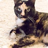 Adopt A Pet :: Malory - Chicago, IL