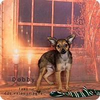 Adopt A Pet :: Dobby - Riverside, CA