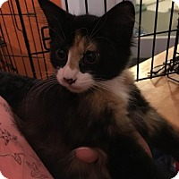 Adopt A Pet :: Pickles - Naugatuck, CT