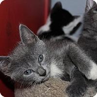 Adopt A Pet :: Flower - Tampa, FL