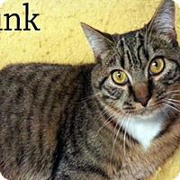 Adopt A Pet :: Tink - Hamilton, MT