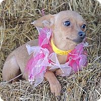 Adopt A Pet :: Salsa - Joplin, MO