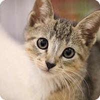 Adopt A Pet :: Boog - Sacramento, CA