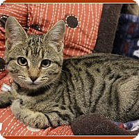 Adopt A Pet :: Betsy - New Richmond,, WI