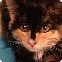 Adopt A Pet :: New arrival - Wenatchee, WA