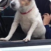 Adopt A Pet :: Ryan - Hop Bottom, PA