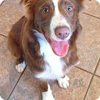 Adopt A Pet :: Damon - Russellville, KY