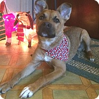 Adopt A Pet :: Tucker - North Olmsted, OH