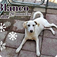 Labrador Retriever/Vizsla Mix Dog for adoption in Boaz, Alabama - Blanco
