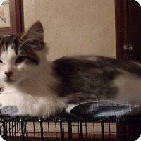 Adopt A Pet :: OREO - Acme, PA