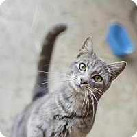 Adopt A Pet :: Duncan - Fredericksburg, VA