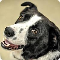 Adopt A Pet :: Jackson - Gainesville, FL