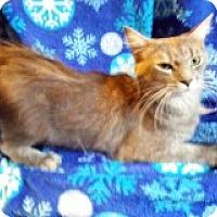 Adopt A Pet :: May - Delmont, PA