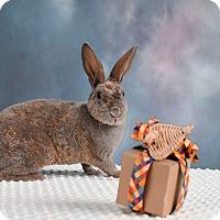 Adopt A Pet :: Blueberry - Marietta, GA