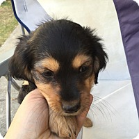 Adopt A Pet :: Natalina - Lodi, CA