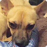 Adopt A Pet :: Jaxper (VA) - Virginia Beach, VA
