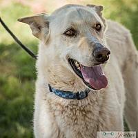 Adopt A Pet :: Sasha - Cedar Crest, NM
