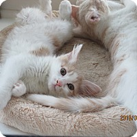 Adopt A Pet :: Snuggles - Jeffersonville, IN