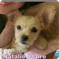 Adopt A Pet :: Natalie Claire - Aurora, CO