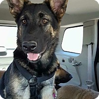 Adopt A Pet :: Loreli - Albuquerque, NM