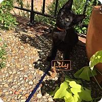 Adopt A Pet :: Lily - Carthage, NC