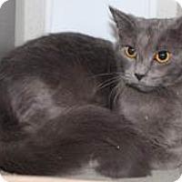 Adopt A Pet :: Kerry - Chesapeake, VA