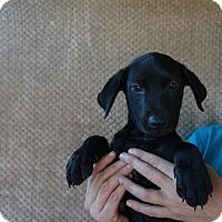 Adopt A Pet :: Jed - Oviedo, FL