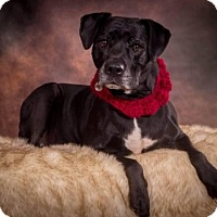 Adopt A Pet :: Abby - West Allis, WI