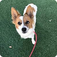 Adopt A Pet :: Chrissy Metz - Brooklyn, NY