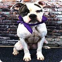 Adopt A Pet :: BRADY - Sanford, FL