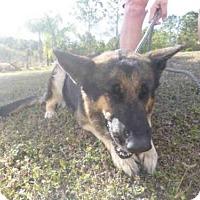 Adopt A Pet :: MAXI - Naples, FL