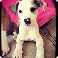 Adopt A Pet :: Sierra - Grand Bay, AL