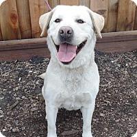 Adopt A Pet :: Jelly - Palo Alto, CA
