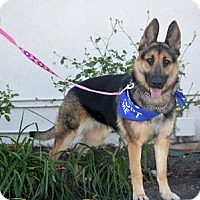 Adopt A Pet :: Lani - Mira Loma, CA
