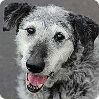 Adopt A Pet :: Gus - Port Washington, NY