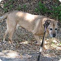 Adopt A Pet :: Ben - La Honda, CA
