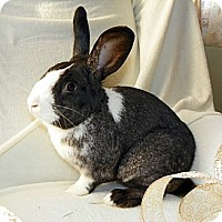 Adopt A Pet :: Rufus - North Gower, ON