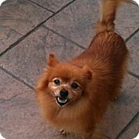 Adopt A Pet :: Autumn - Hilliard, OH