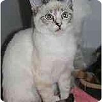 Adopt A Pet :: Keaton - Marietta, GA