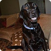 Adopt A Pet :: Figi - Homewood, AL