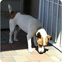 Adopt A Pet :: BEAU - Scottsdale, AZ