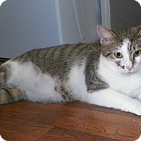 Adopt A Pet :: Simone - Dover, OH