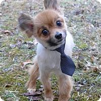 Adopt A Pet :: Xander - Mocksville, NC