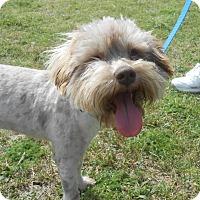 Adopt A Pet :: Mason - Lockhart, TX